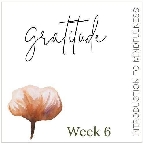 Week 6: Gratitude